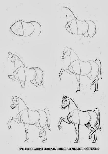 как нарисовать лошадь.