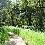 GNW track near Flaggy Creek (337855)