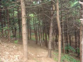 청룡산생태숲길