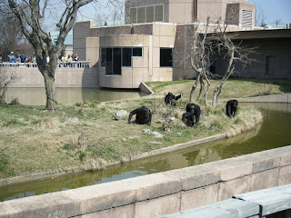Tulsa Zoo ~ Chimpanzees