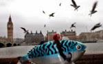 «Хью в борьбе за рыбу» / Hugh's fish fight