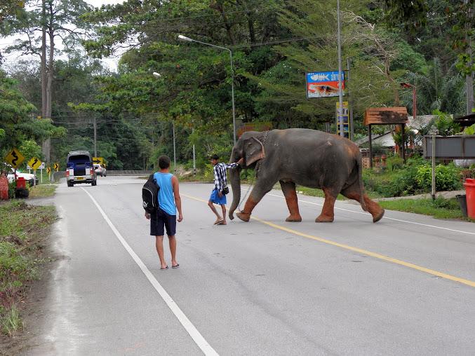 https://lh6.googleusercontent.com/-6dbyuh75Iy4/Up0Ya6pbhmI/AAAAAAAAE08/h1-Purvkisw/w677-h508-no/Tajlandia+2013+972.JPG