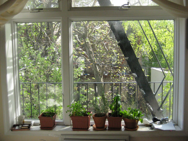 i-want-to-grow-a-plant-in-my-apartment-in-manhattan