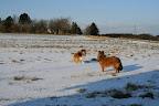 De to små fik også lige en tur ude på den anden mark..... :-)