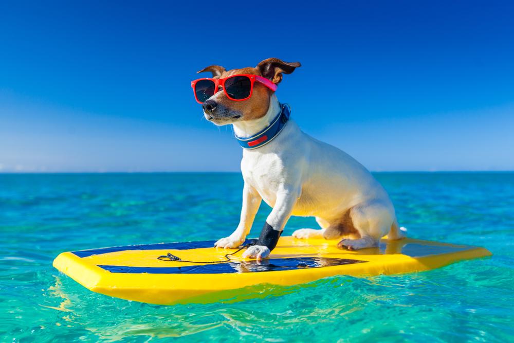А вы знали что на Мальдивах запрещены собаки? | Почему на Мальдивах нет собак