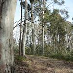 Tall eucalypt forest (290446)