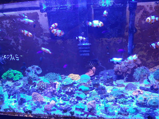 Tropical Fish Store «Aquarium Oddballs», reviews and ...