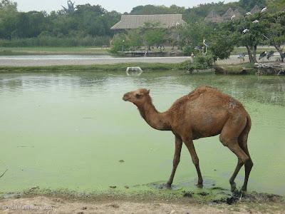 Safari World - Safari Park Bangkok Photo 15