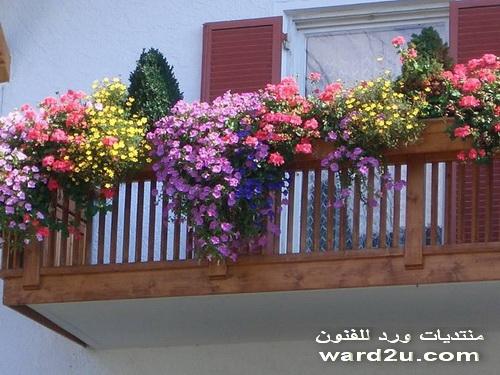 a%2520%25281%2529 بعض الافكار والاذواق والانظمة لتنسيق الحدائق والشرفات والمنازل بالورود