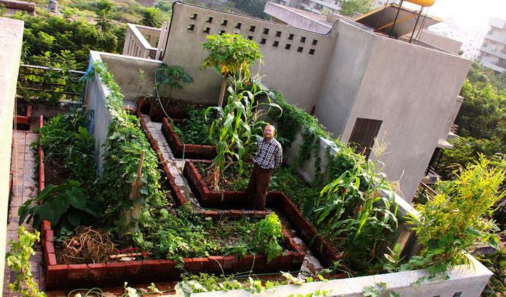Piccolo orto da dove cominciare un quadrato di giardino for Terrace vegetable garden kerala