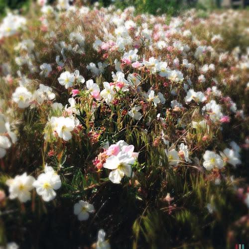 An unidentified wildflower