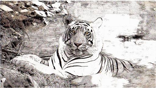 tigerupdate-2015-03-9-19-49.jpg
