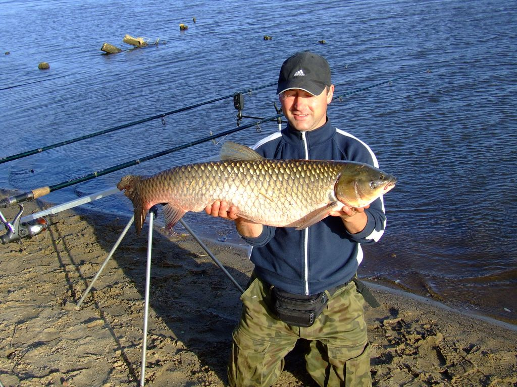 Fishing in poland spinning casting and flyfishing for for Grass carp fish