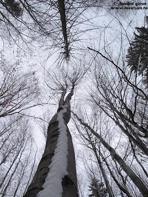 peisaj de iarna la padure