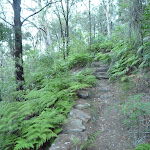 Near the bottom of Mt Kuring-gai Track (422008)