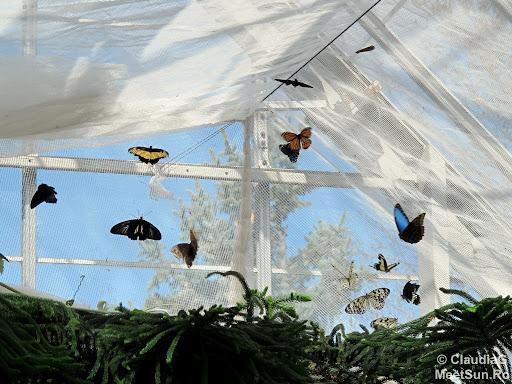 Gradina Botanica - Fluturi si Flori.