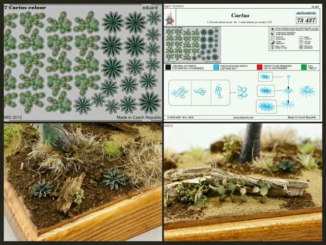 cactus Eduard