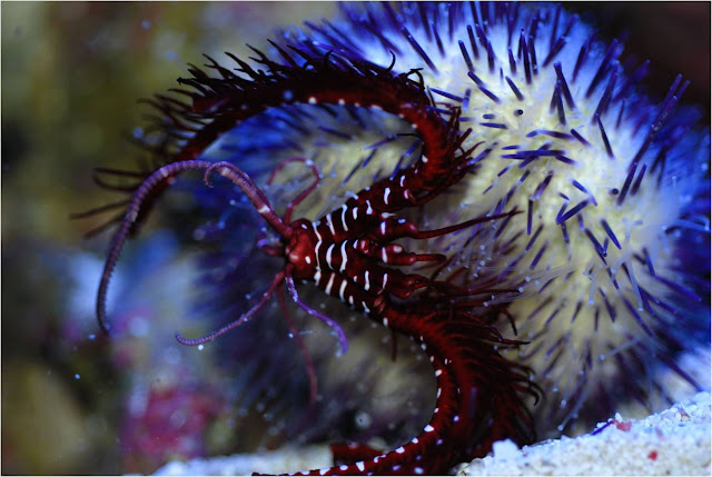 Ugly fish: Undersea natural arms race inspires creeping crinoids
