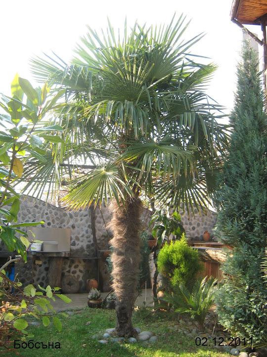 Комнатные растения с красивыми листьями