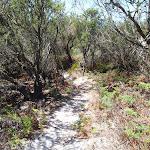 Kangartha Track north of Wallagoot Gap (104428)