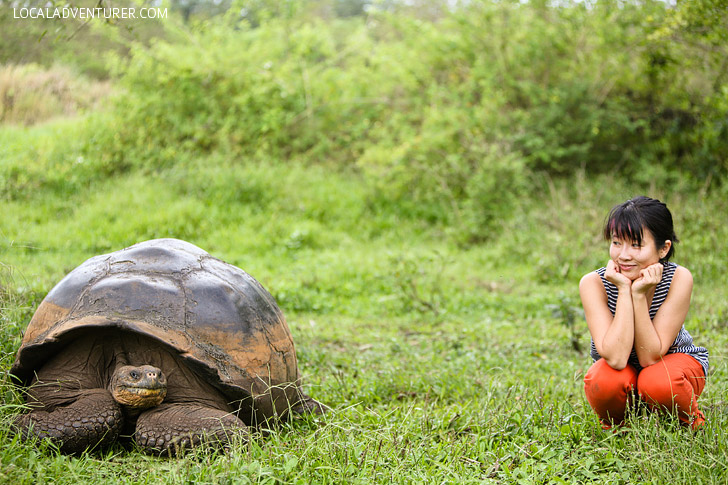 Visiting the 100 Year Old Tortoise at the Galapagos Tortoise Ranch.