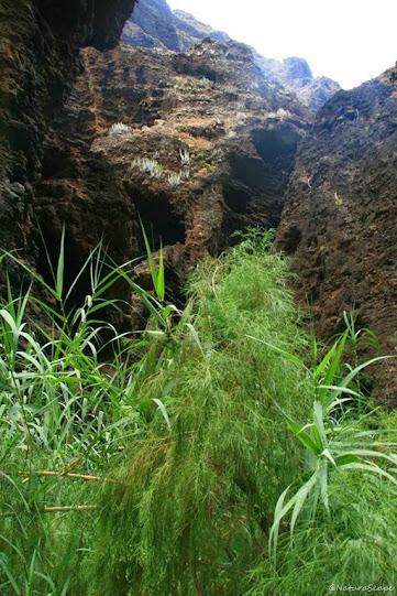 Vegetación en Barranco Masca