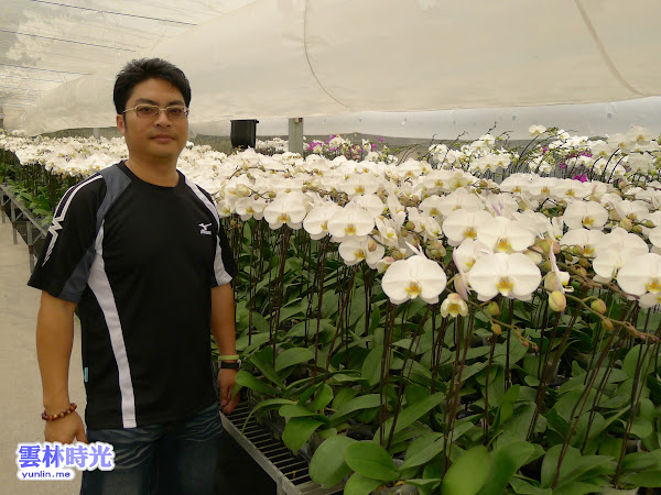 花卉達人-陳源彰優質蝴蝶蘭外銷 限量贈送50棵蝴蝶蘭花苗