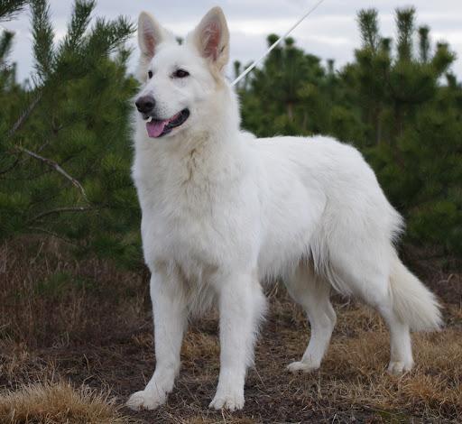 Abigeil White Wolf