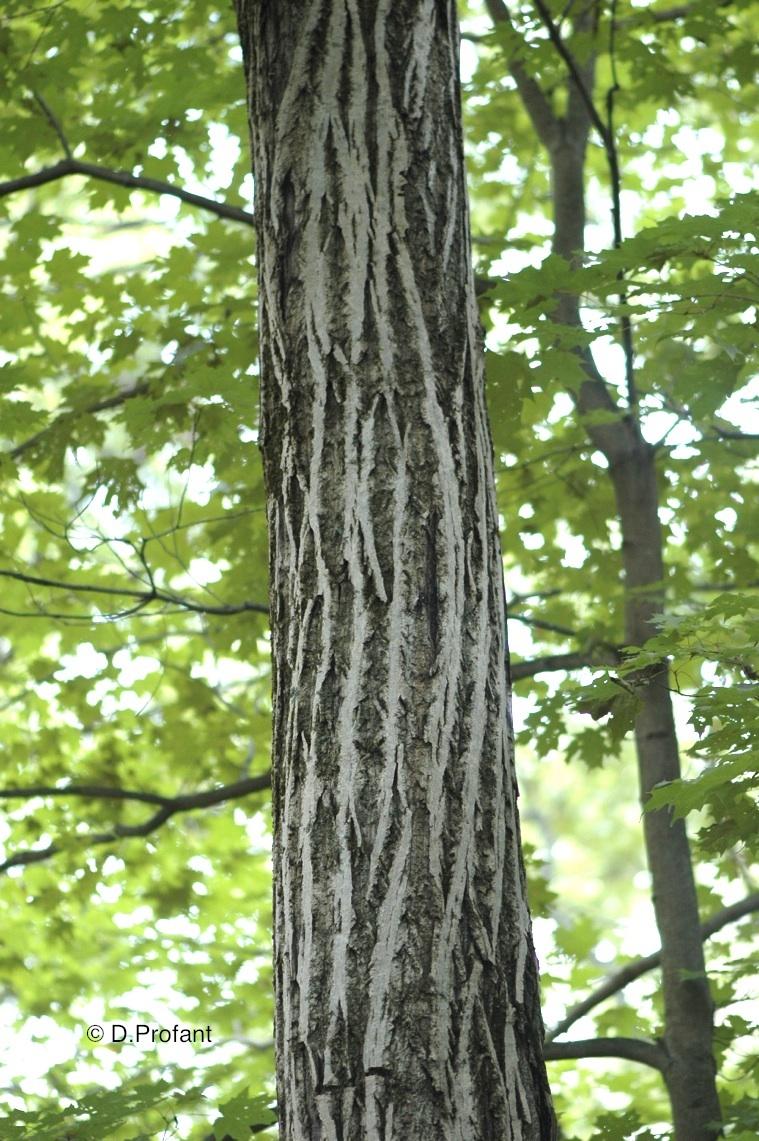 Field Biology In Southeastern Ohio Is Bark Worse Than A Bite