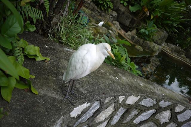 bird at Kuala Lumpur Bird Park