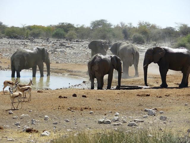 أفضل ما في أفريقيا  Best of Africa Namibia_180807124644