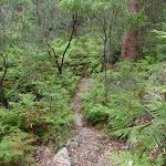 winding through the bracken ferns (90411)