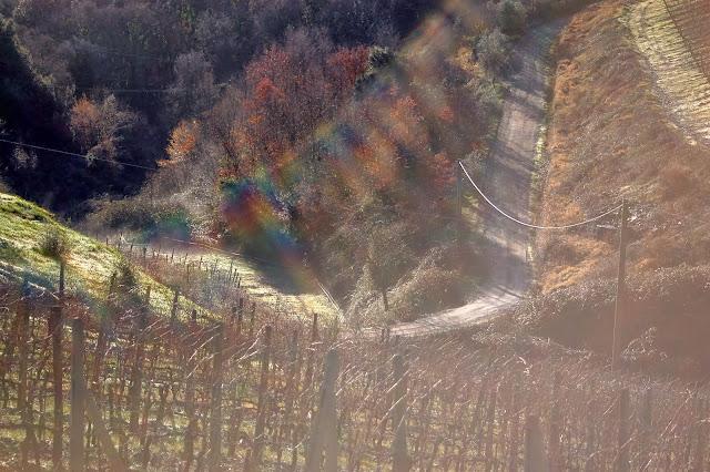 Vineyard near Montalcino in January