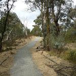 Bullocks Walking track (295018)