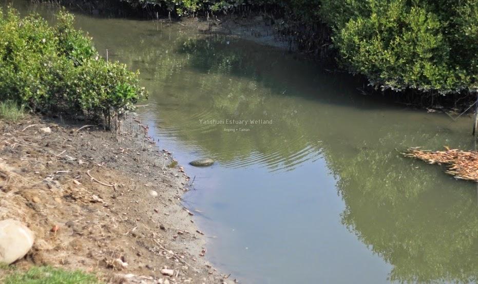 台南安平鹽水溪河口溼地