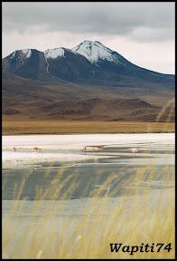 Un mois aux pays des Incas, lamas et condors (Pérou-Bolivie) - Page 3 CD3%2520%252821%2529