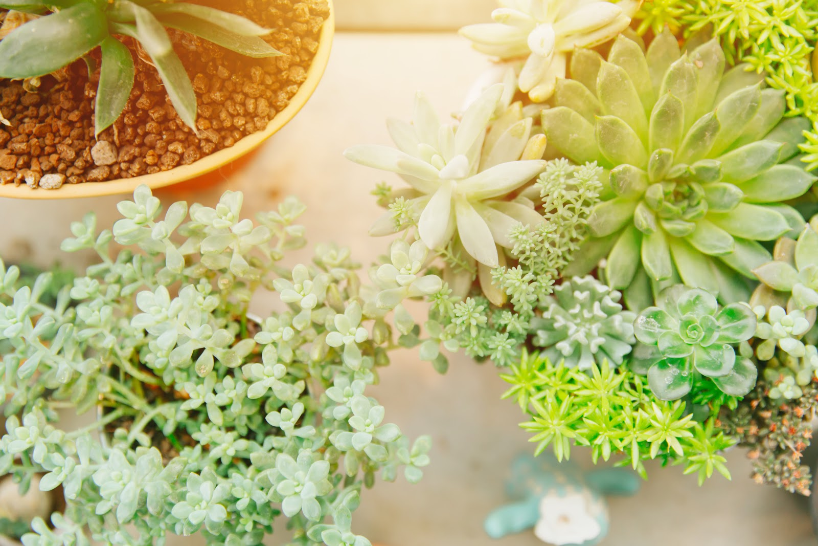 how to take care of succulents: succulents receiving sunlight