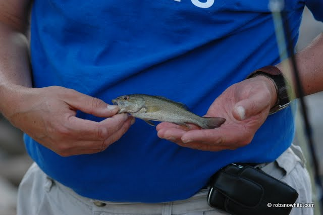 tiny smallmouth