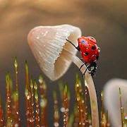 К чему снятся насекомые?
