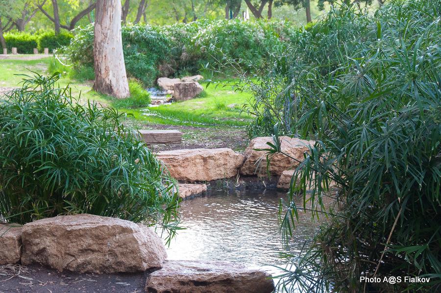 Парк Афек. Исток реки Яркон. Экскурсия по реке Яркон в Тель Авиве и Яффо. Гид в Израиле Светлана Фиалкова.