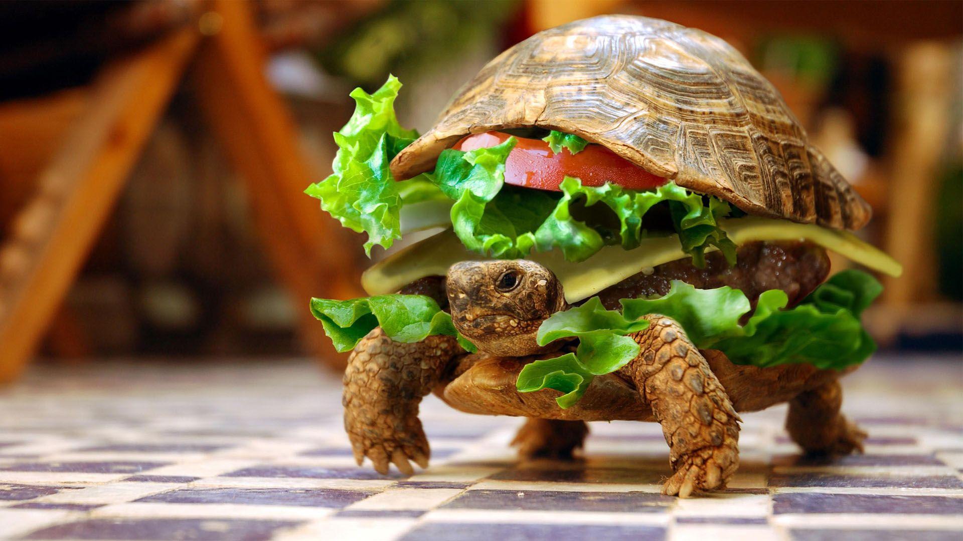 Breakfast Turtle Mystery Wallpaper