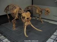 Elefantes pigmeos de Sicilia