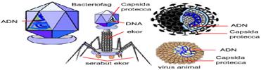 materi dan bahan ajar biologi, strutktur tubuh virus