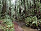Butano Creek Trail