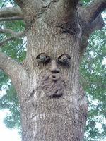 ομοίωμα δεντρανθρώπου,κρόνιο γένος,dummy tree man,cronian race