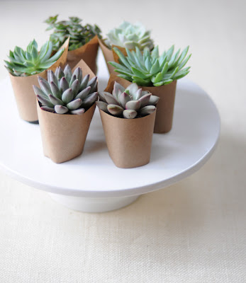 semplicemente perfetto wedding planner centro tavola center piece piante grasse ecologico diy