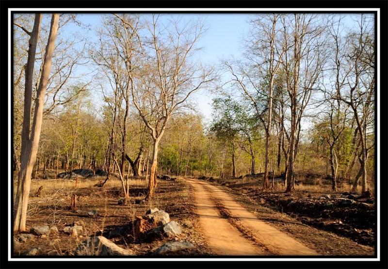 Betla Forest