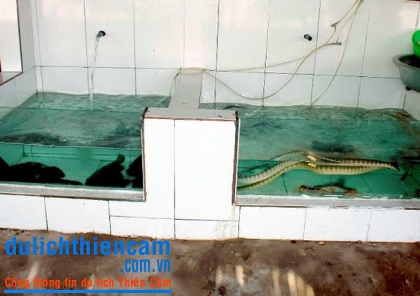 Bãi tắm Thiên Cầm