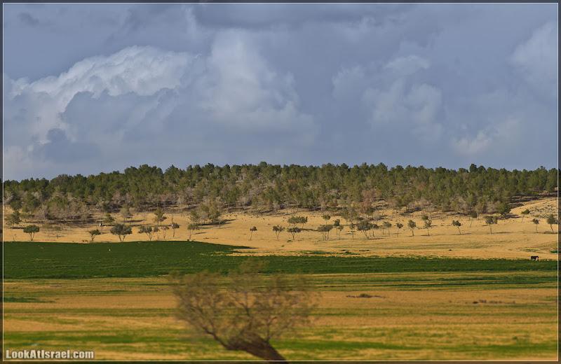 il/Одно фото / Израиль,  (20120126 negev 003 3691)