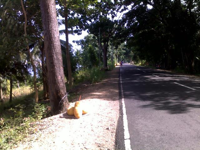 image of nangka / jackfruits on display on the roadside, santander, cebu, philippines